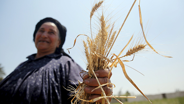 Millions of Rural Working Women in Egypt at Risk from Climate Change